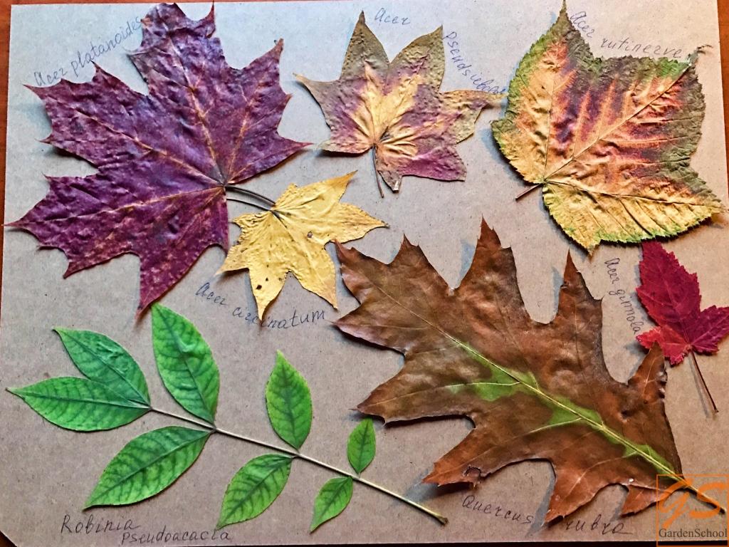 Как сделать аппликацию из засушенных листьев с ребенком. Пошаговый алгоритм.